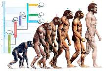 319515-evolution-evolution-of-humans