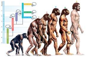 319515-evolution-evolution-of-humans
